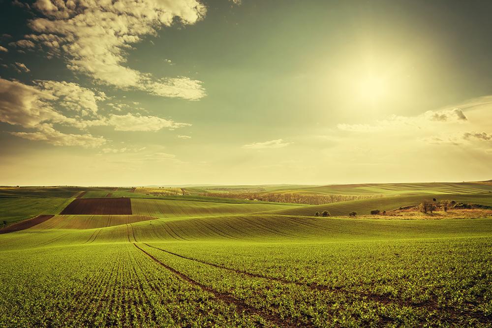 terrenos agricolas