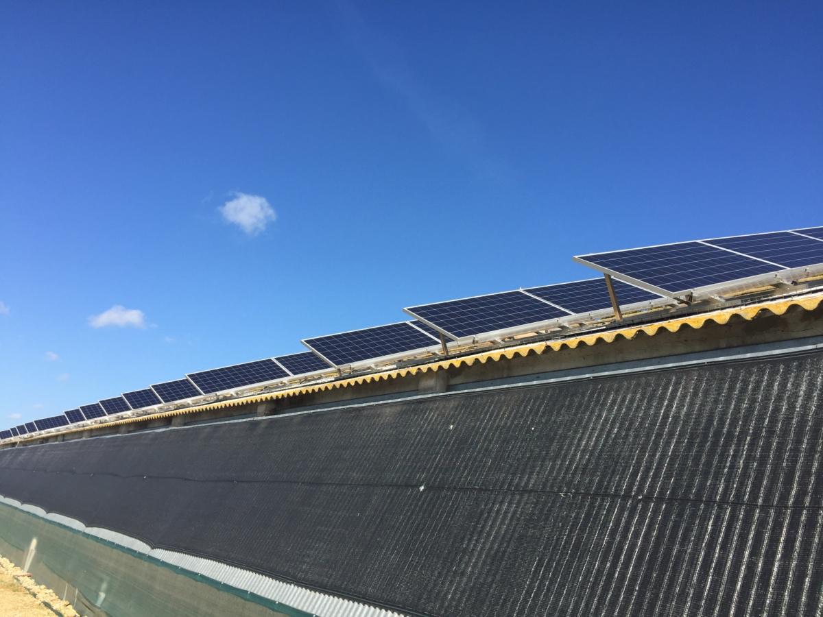 placas solares granja avicola
