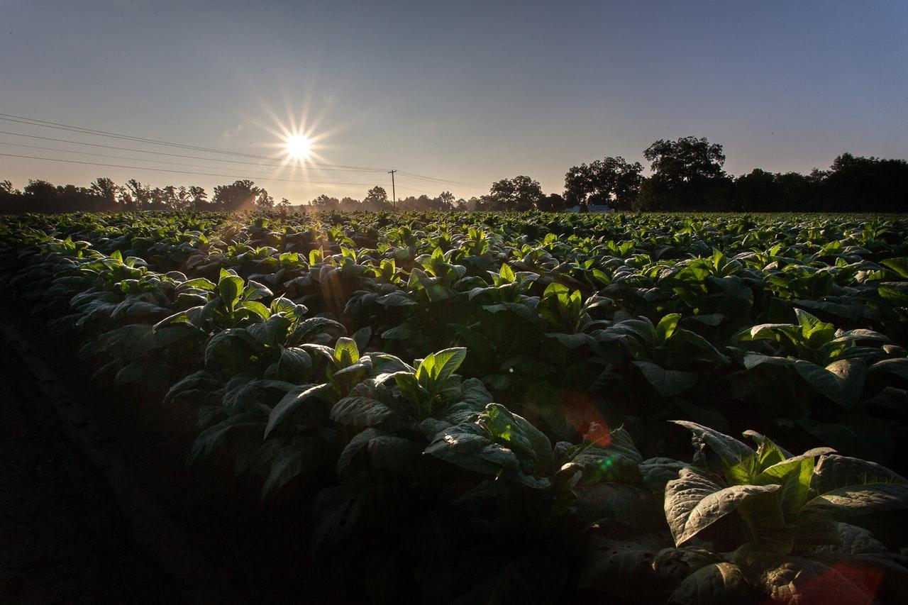 ahorrar agua agricultura bombeo solar